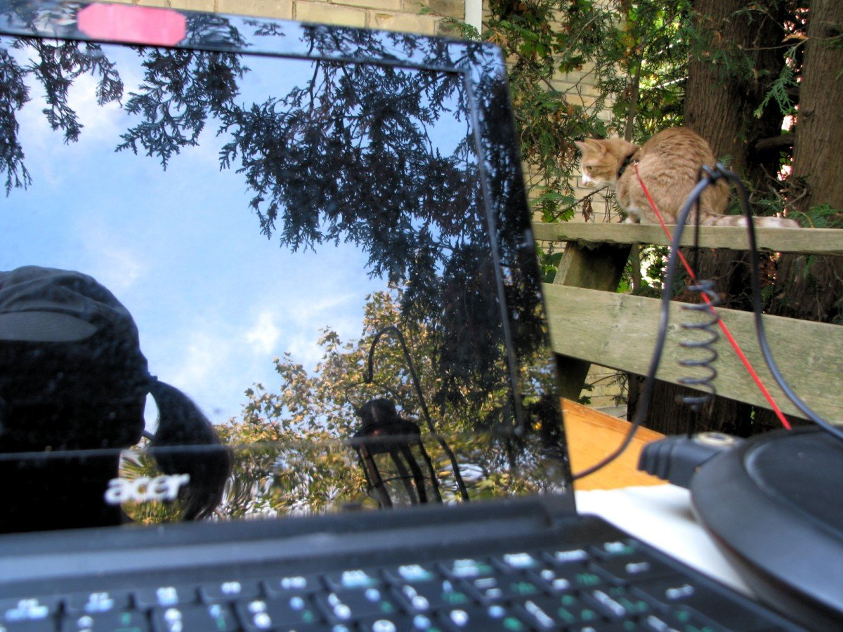 I'm reflected in the shiny netbook that's set up on a table on the deck, my harnessed cat nick sits nearby on the railing.