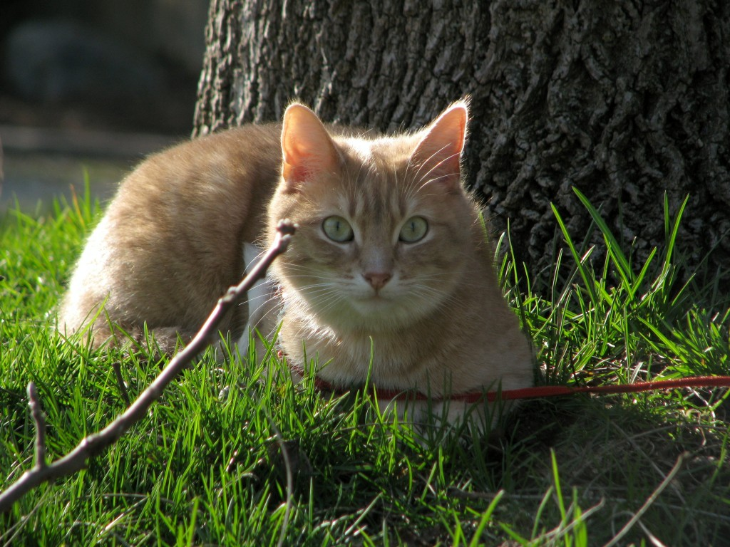 leashed cat under tree