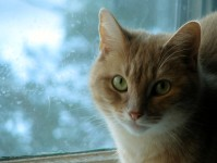 ay the ginger cat in the window
